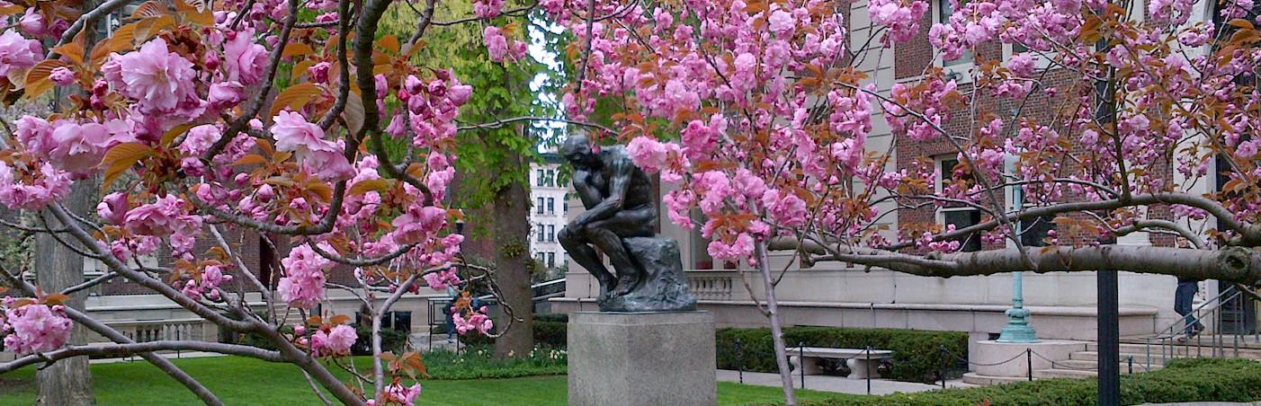 "Photo of ""The Thinker,"" a statue on Columbia's Morningside campus, surrounded by pink blossoms in spring"