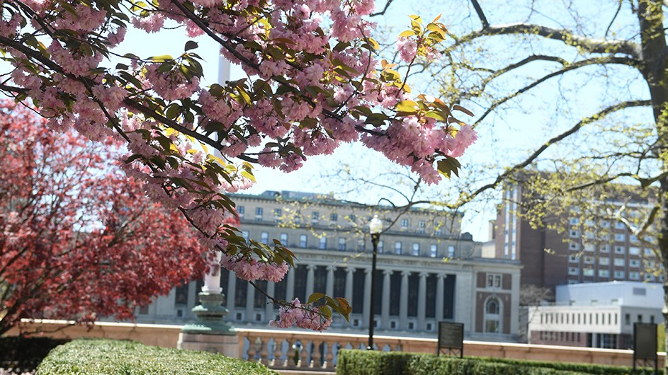 a flowering tree branch, against the background of Butler Library on Columbia's Morningside campus
